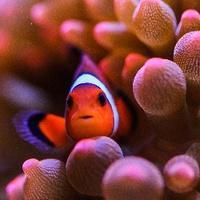 如何学院派的养珊瑚