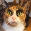 浓眉大眼腹肌猫