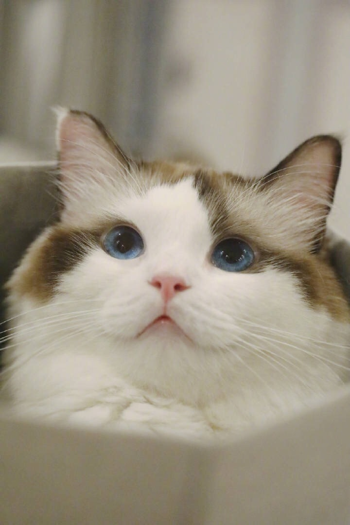 有哪些好看的猫咪壁纸或头像?