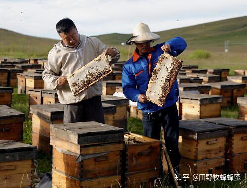 什么是牛奶蜂蜜?为什么桉树蜂蜜?
