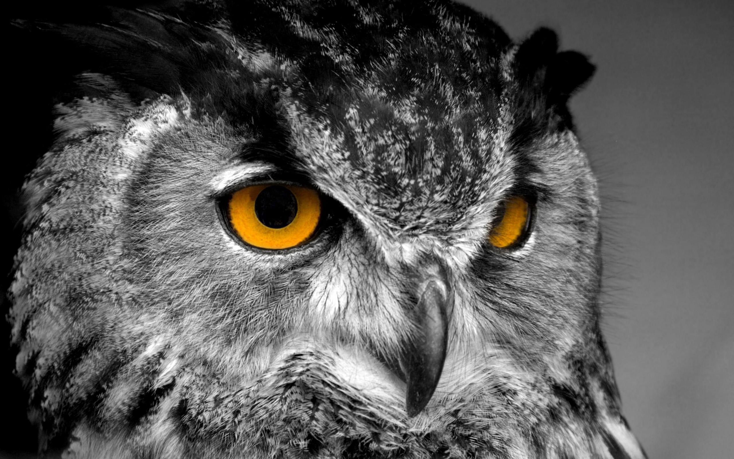 动物卡通图_有没有好看的猫头鹰图片? - 知乎