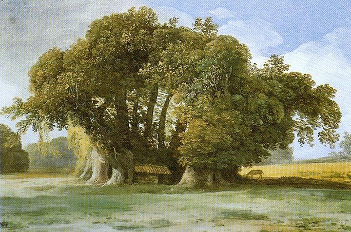 奠柏_百骑大栗树和它总配不对的照片 - 知乎