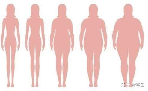 简单的营养减肥餐食谱图片
