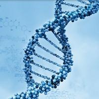 Exons - 基因真探