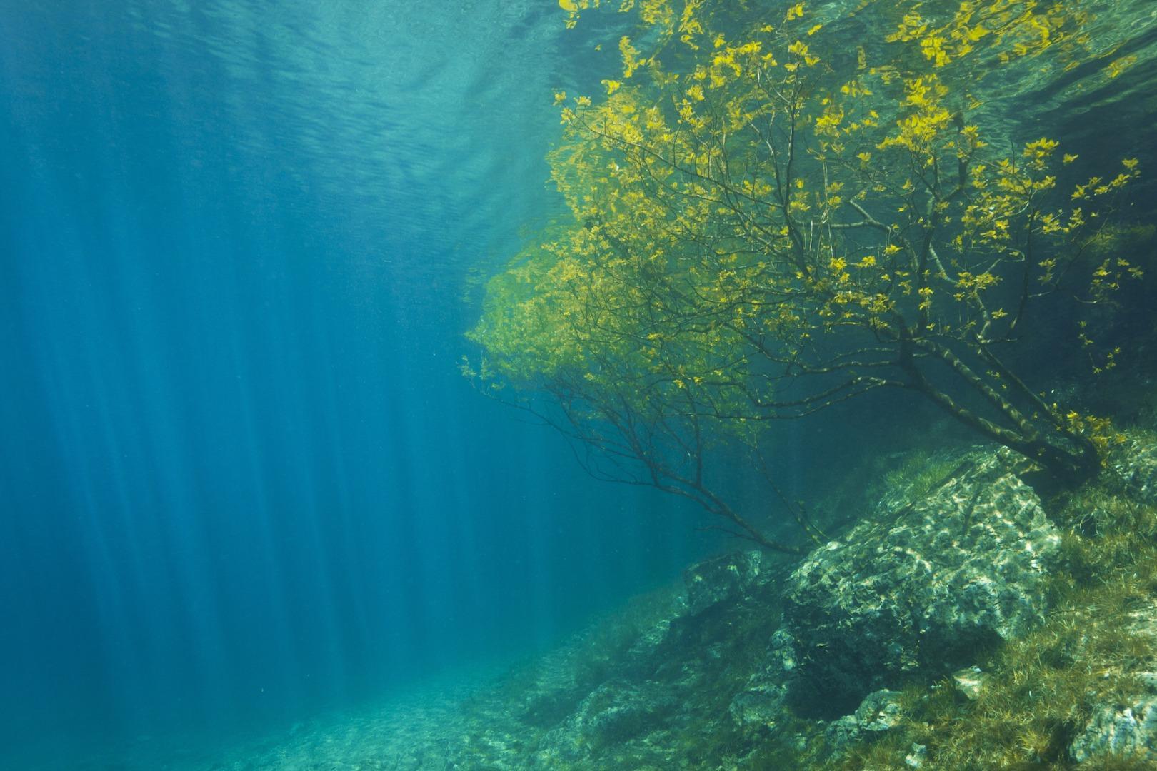 水下探秘   在这里,你能看到世界沉入水底的模样