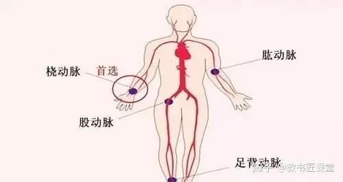 知 橈骨 動脈 触