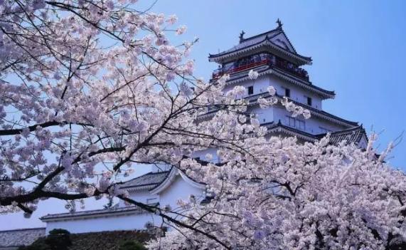 日本报团旅游有多黑?