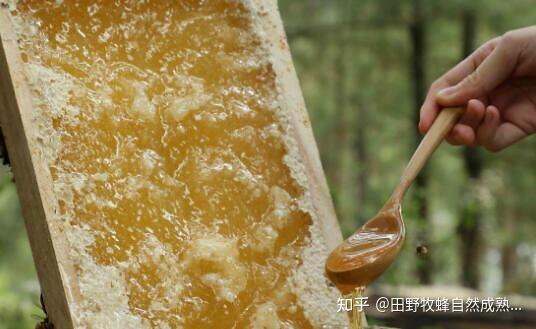 蜂蜜不适合喝酒?什么体质不适合喝蜂蜜?