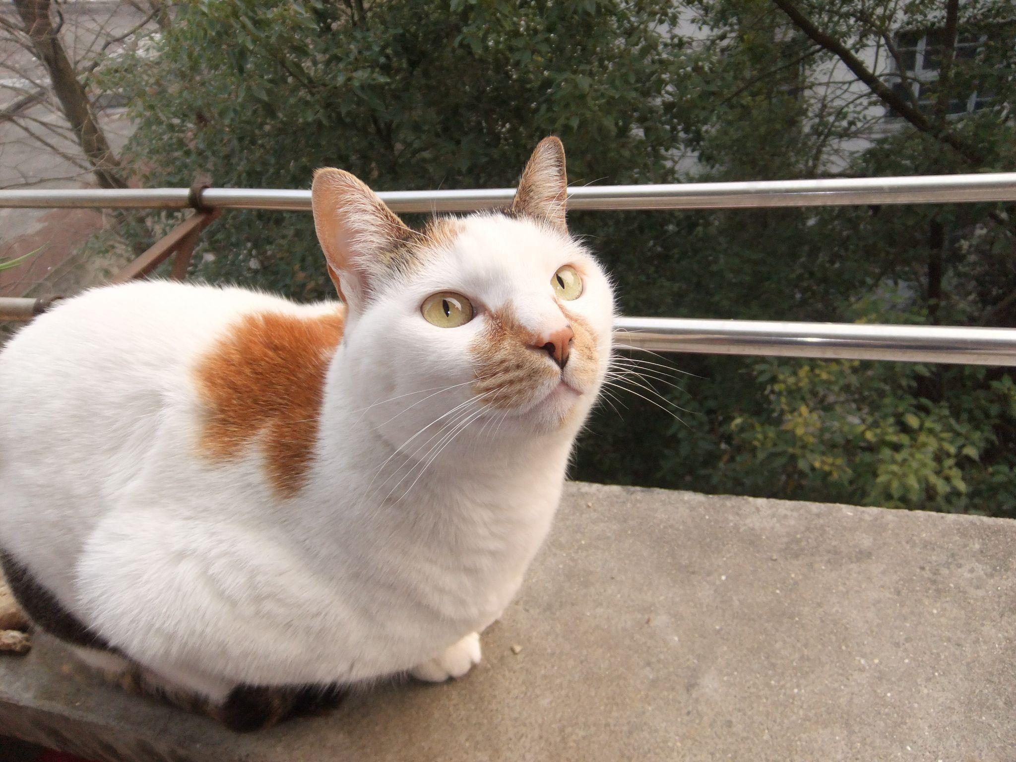 我的世界花盆怎么做_猫死了,人怎么处理猫尸体? - 知乎