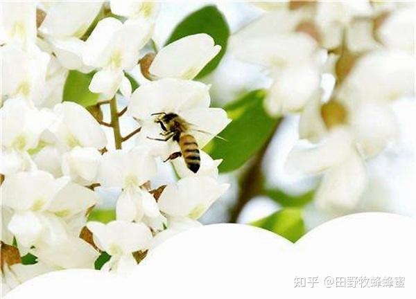 真正的外国蜂蜜的颜色是什么?什么样的外国蜂蜜好?