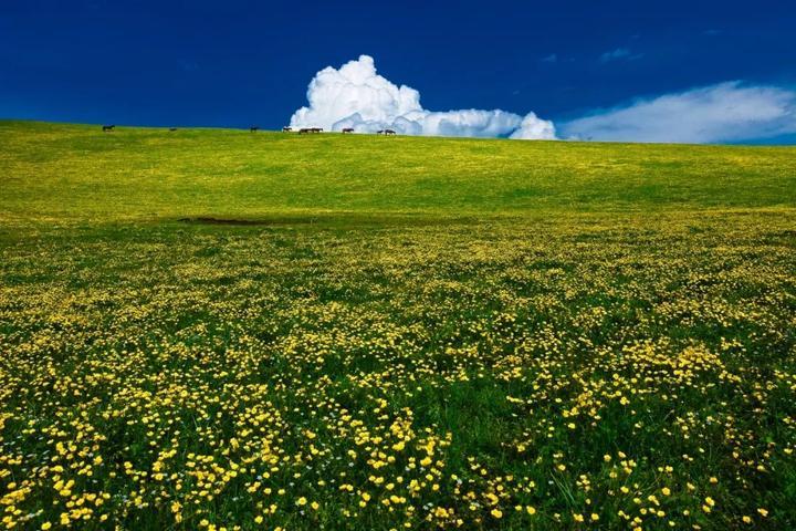 """喀拉峻徒步凭什么被誉为""""天山最美徒步摄影路线""""?"""