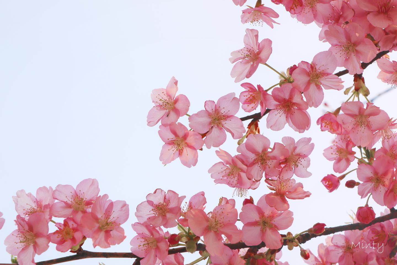 Spring Cloud OAuth2 实现用户认证和单点登录