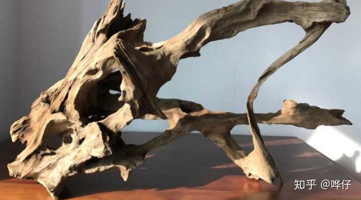 短鲷蹭木头