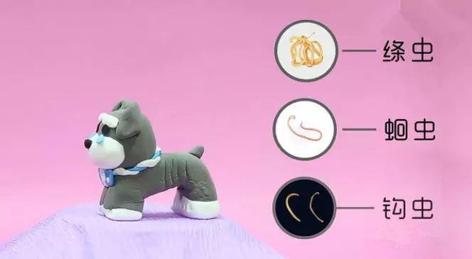 图解狗狗体内寄生虫_狗狗体内体外有寄生虫的10大症状,宠物应该多久驱虫一次? - 知乎