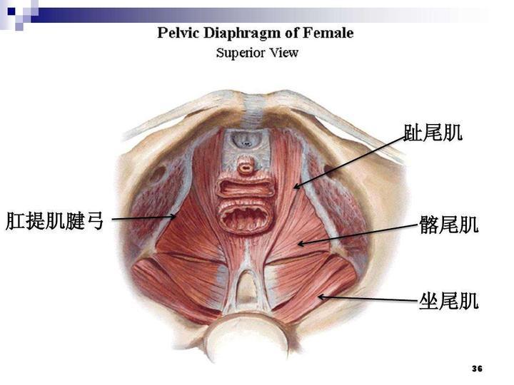 老妇女子宫�_老年妇女子宫脱垂(子宫下垂)现在有多少治疗方案,利弊