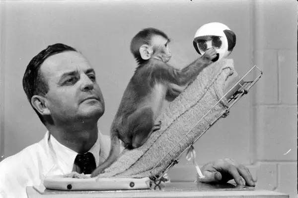 【依恋】依恋理论之猴类研究|完整的恒河猴实验