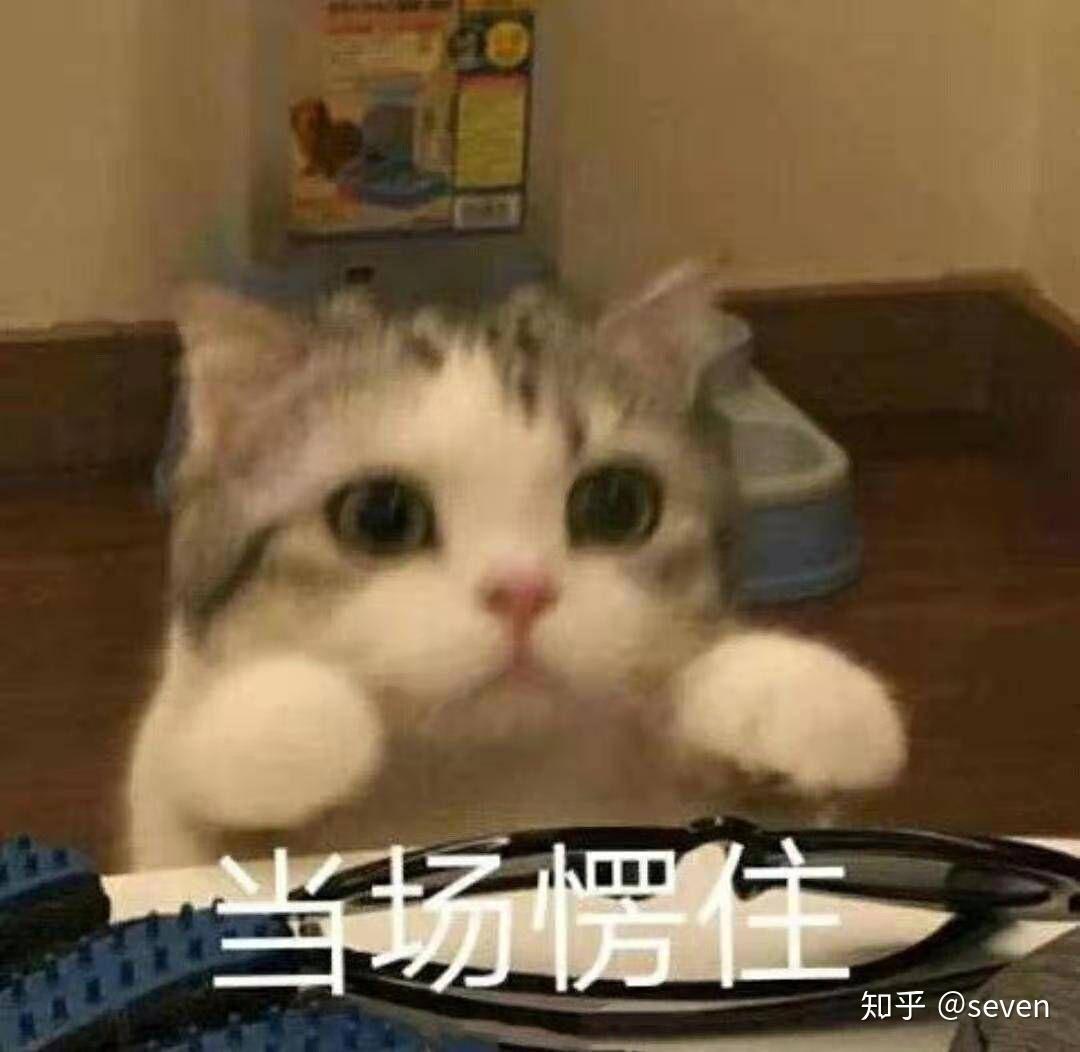 有什么特别可爱猫猫的动态图或表情包吗?