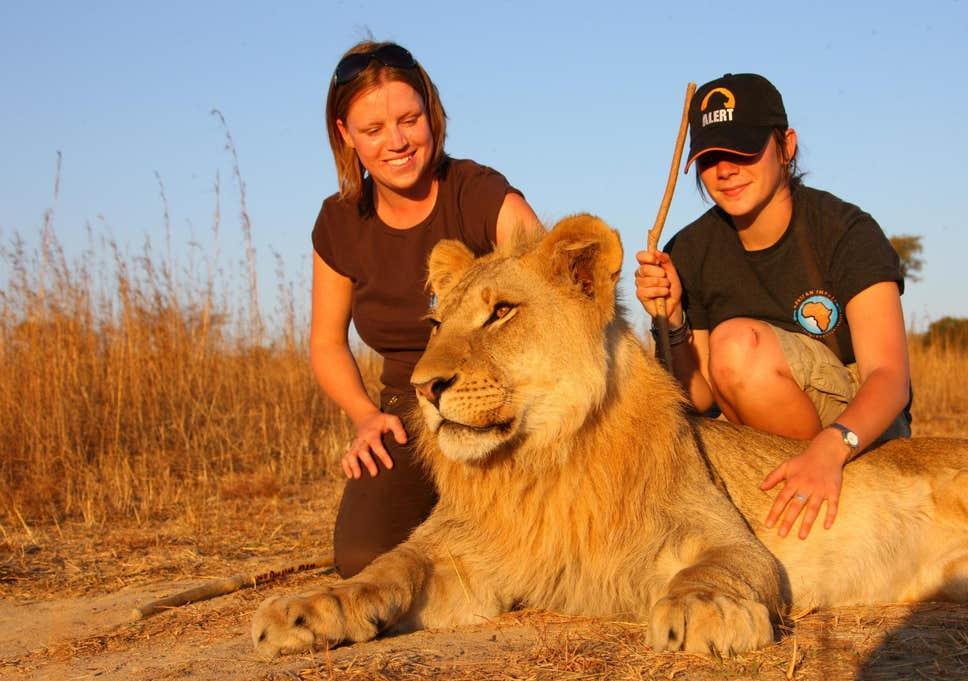 撸猫过敏,撸狮子会不会也过敏?