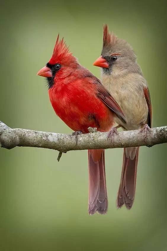 自然界有哪些漂亮的鸟类?