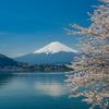 樱花季,赴日旅行如何安排行程?