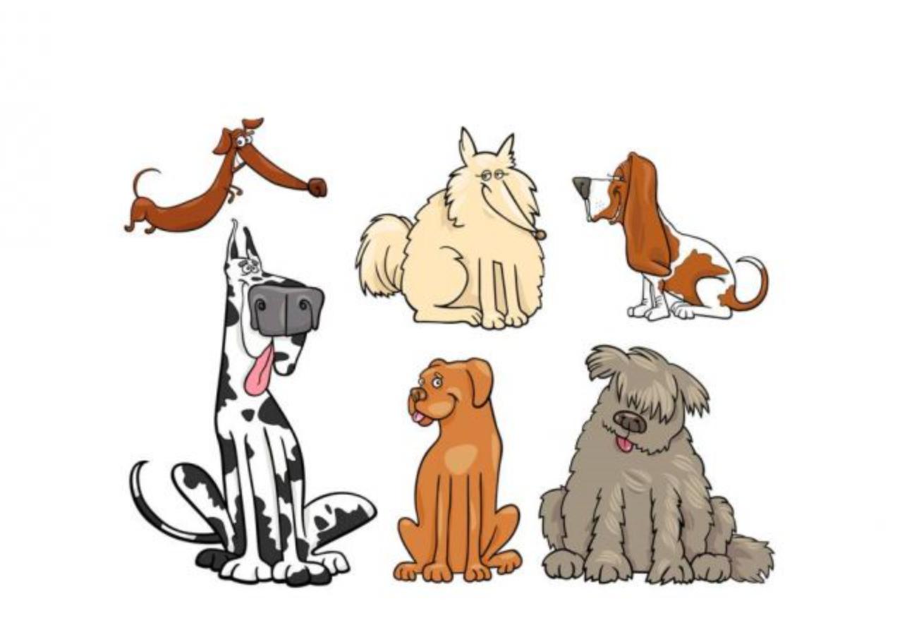 狗年说狗·狗狗的智商排名真的靠谱吗?