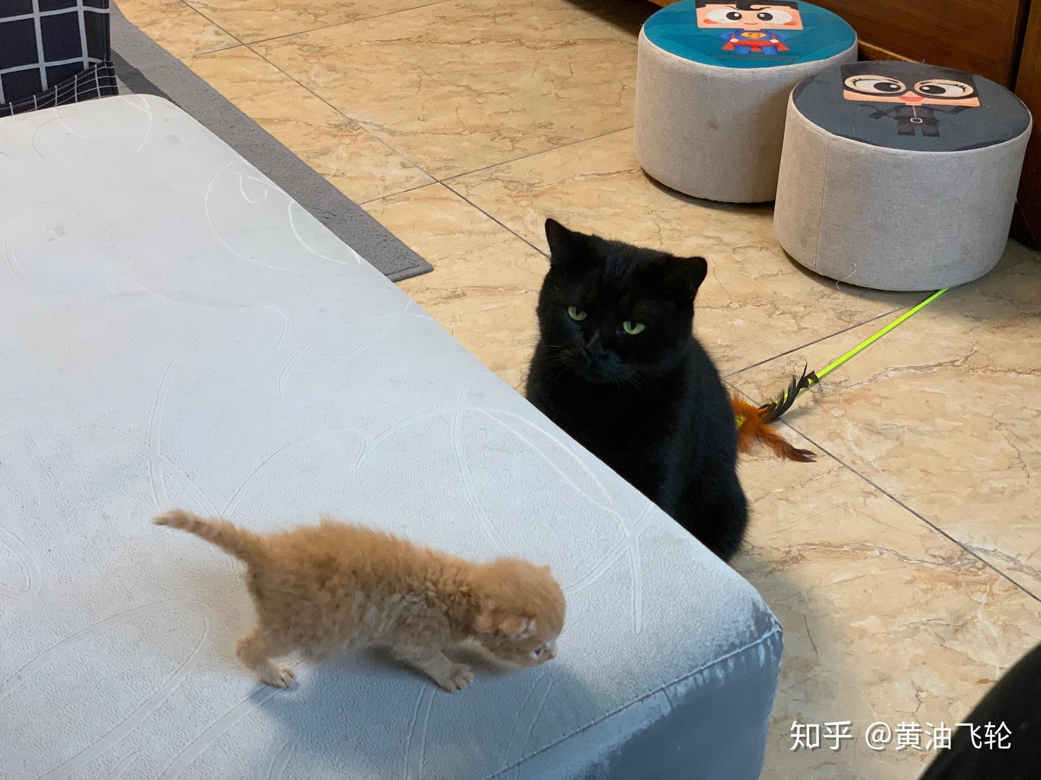 吃死猫的眼睛_收养刚出生的猫,它会不会认为你是它的妈妈?会不会很黏你 ...