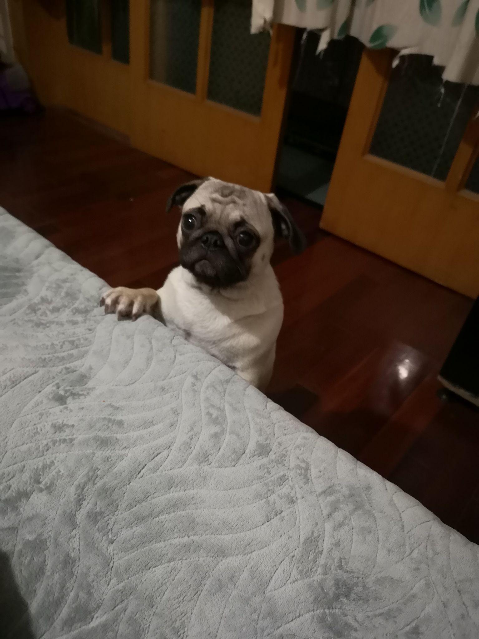 从来就没爱过你_你们会允许宠物睡你床上吗? - 知乎