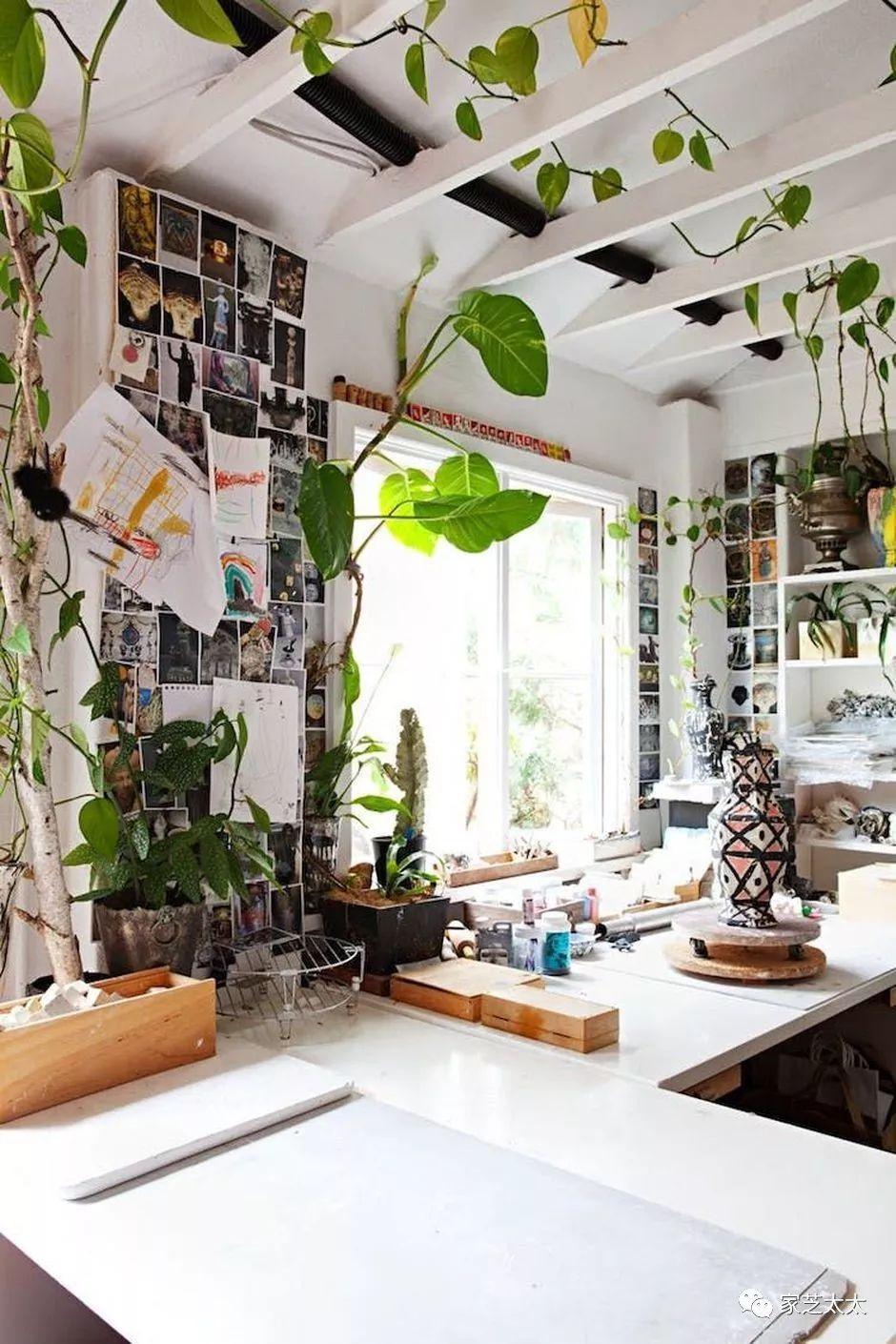 阳台种植爬山虎_有哪些适合家里阳台种植的藤本植物? - 知乎