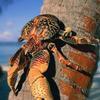 究极虚弱老螃蟹