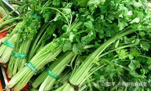 芹菜蜂蜜一起吃饭吗?芹菜蜂蜜汁的效果和作用