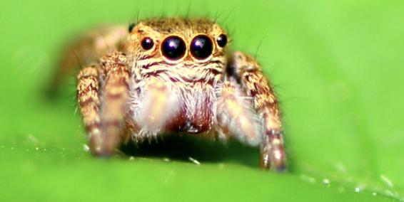 除了想让你再活500年,这条虫子现在还想给精子当马达。