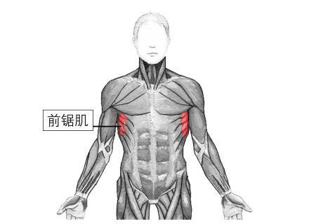 拥有前锯肌才是检验身材的标准!