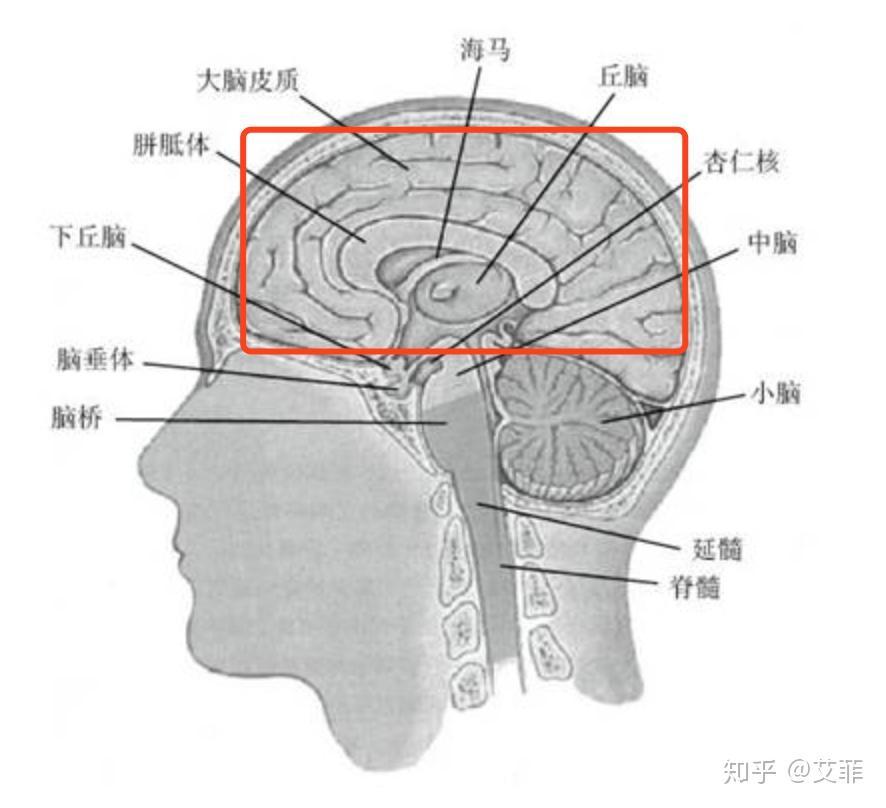 情绪控制_5分钟极速认识神经系统和脑 - 知乎