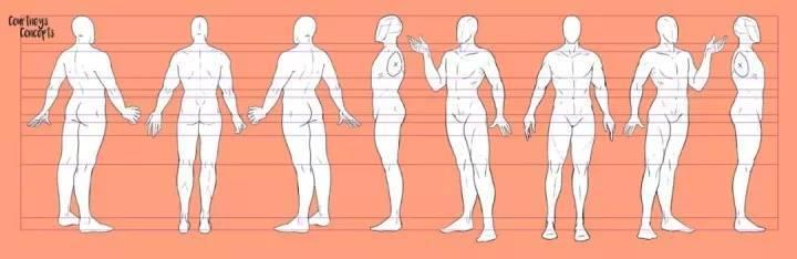 人体肌肉_如何快速学会画人体?附送超多人体素材! - 知乎