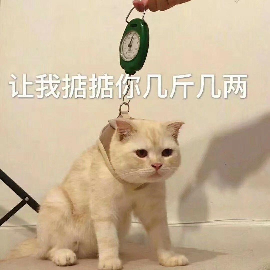 动态图_有什么特别可爱猫猫的动态图或表情包吗? - 知乎
