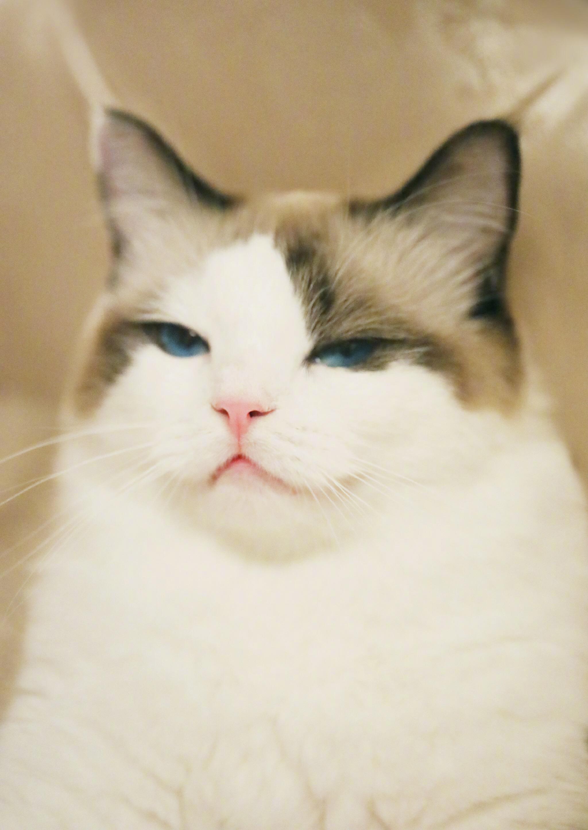一群猫头像_有哪些好看的猫咪壁纸或头像? - 知乎