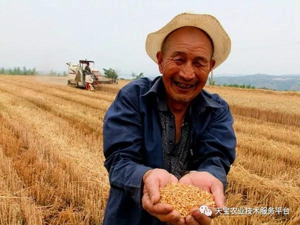 中国农业最尖锐的九大问题!个个扎心!