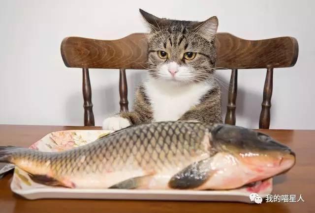 猫真的天生爱吃鱼吗?真相来了