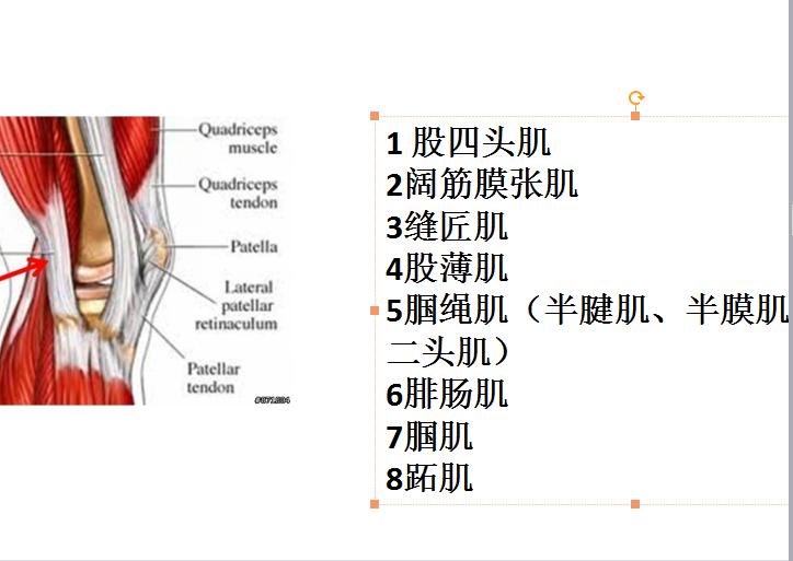 小腿三头肌_半月板损伤、髌骨软化、膝关节炎、滑膜炎等不是你膝盖疼痛的 ...