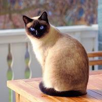 爱学习的Python猫