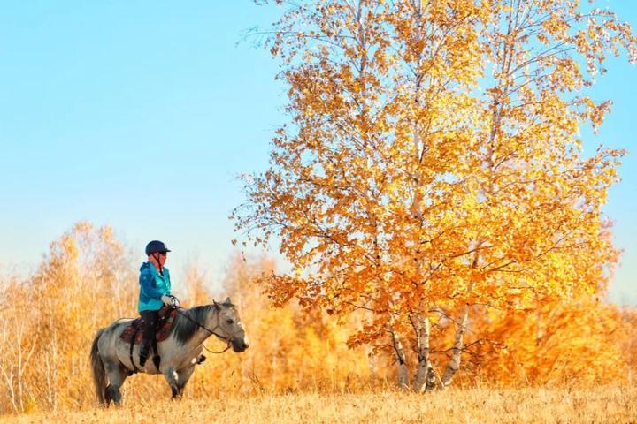 关于林��h���9�-z)�bi_每年只有这个月,白桦林美成诗句.|呼伦贝尔小众旅行