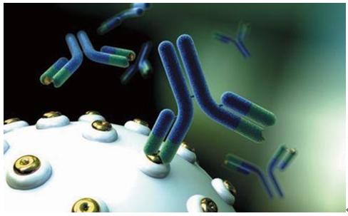 抗原抗体特异性结合_什么是抗原什么是抗体? - 知乎