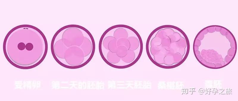 医生,囊胚成功率高,你为什么不给我移植?/
