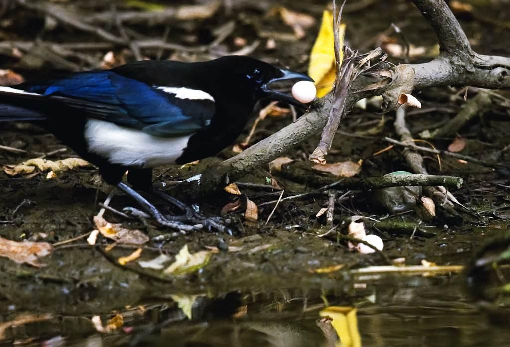 拍鸟网图片_这是北京拍的鸟,请问是啥鸟? - 知乎