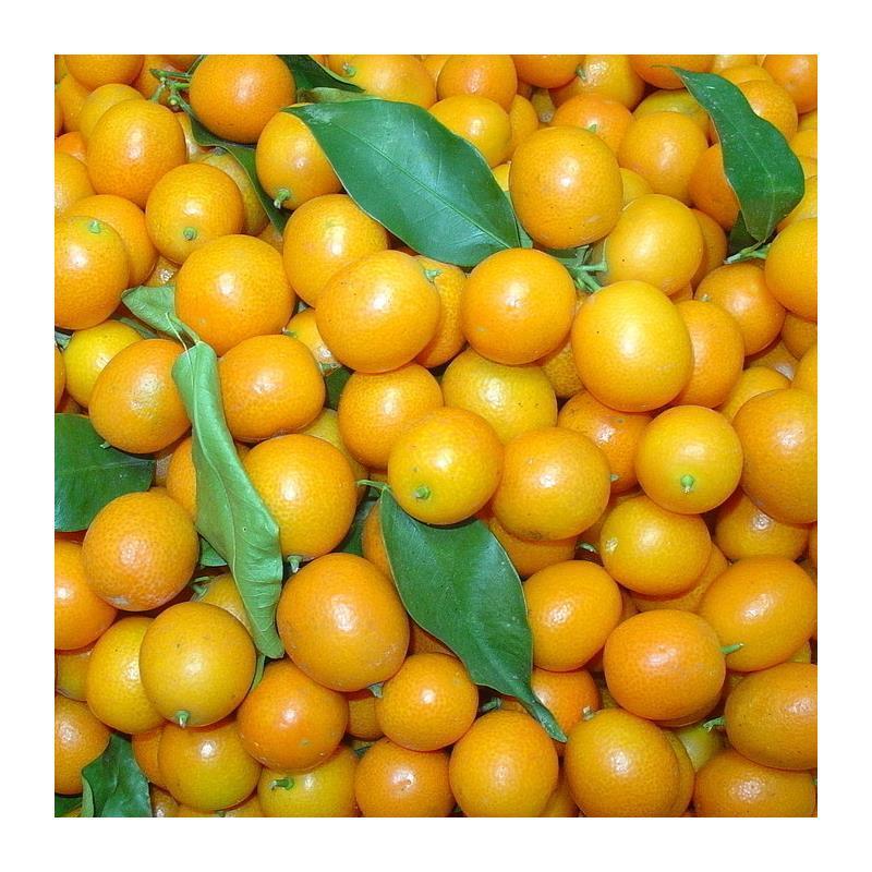 Kumquat可以加上你的蜂蜜吗?金橘蜂蜜水实践