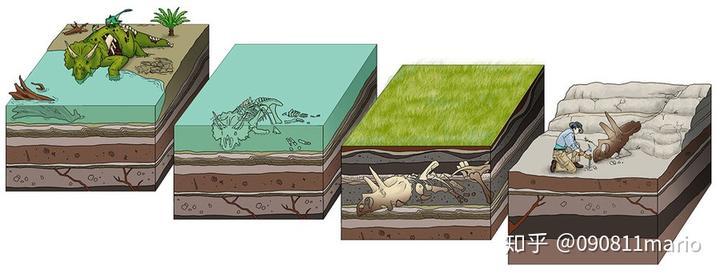 如何成为一块优秀的化石?