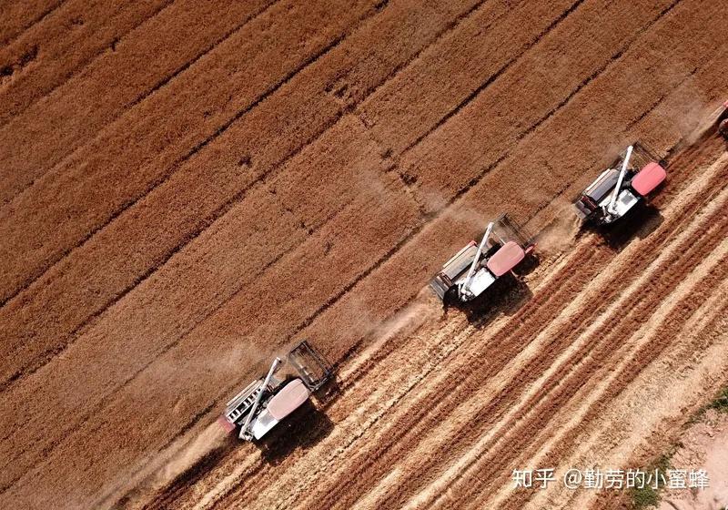 新小麦入市在即,目前小麦产量、价格走势如何?
