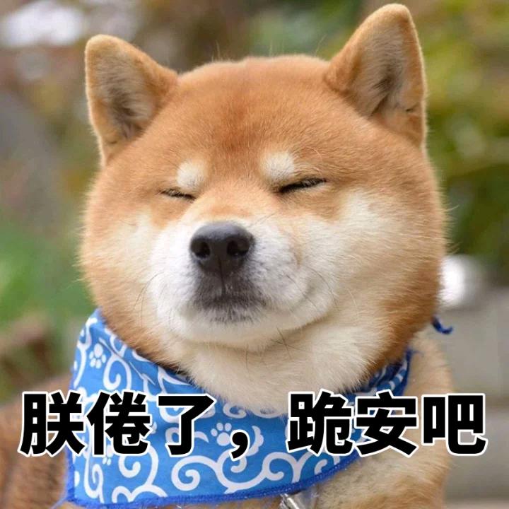 有哪些超级可爱的柴犬的表情包?